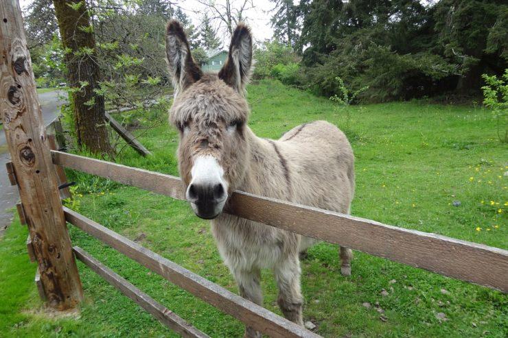 donkey-1582286_1280-740x493